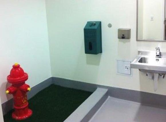 У Львівському метро з'явилися туалети для песиків